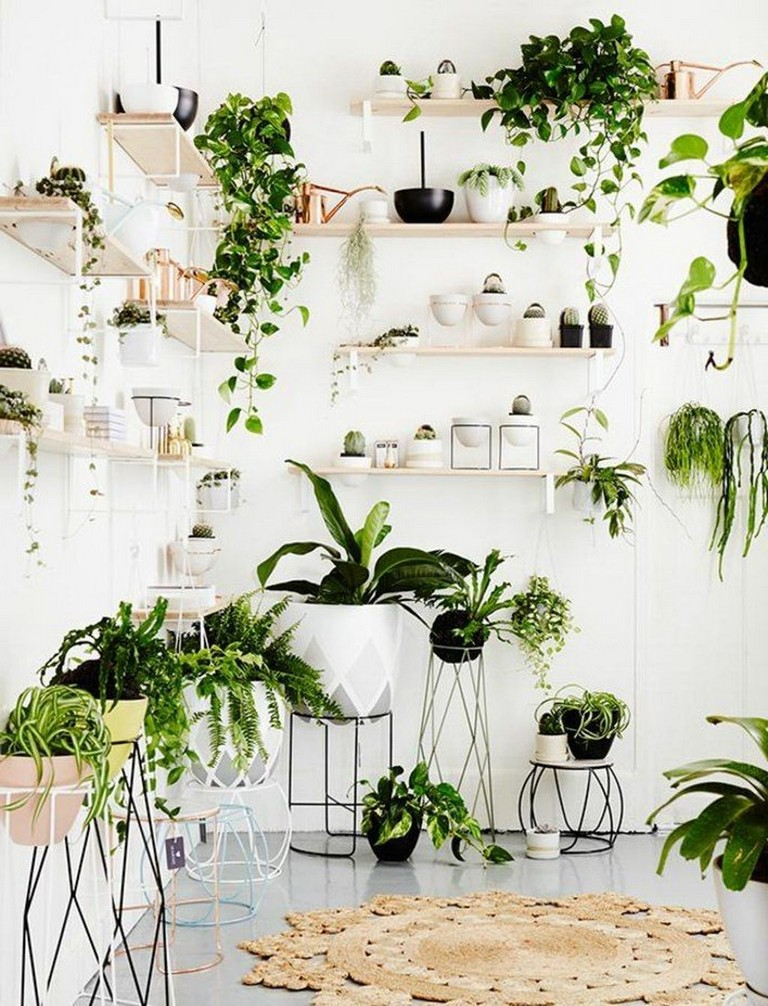 45+ Easy Simple House Plants Indoor Decor Ideas - Page 2 of 2
